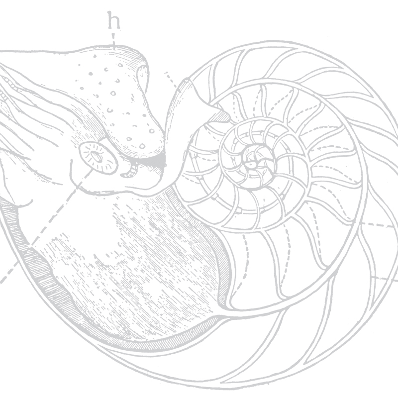 background shell illustration