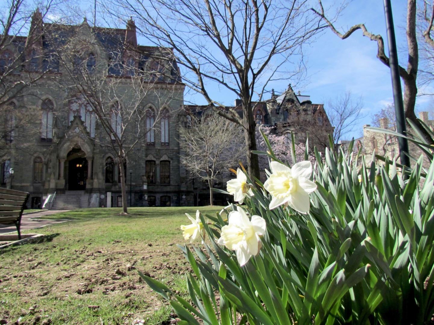 College Hall with Daffodils