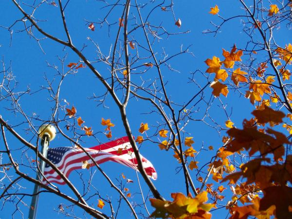 Photograph of leaves and the American flag